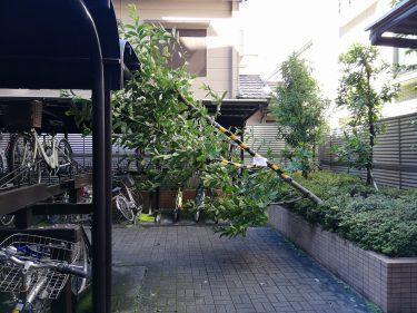 マンション内の倒木