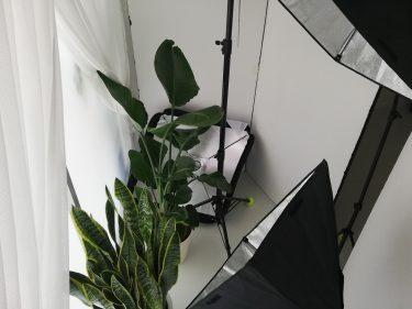 スタジオではサンルームで観葉植物の育成