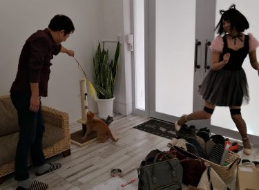 高田馬場スタジオにネコ撮影