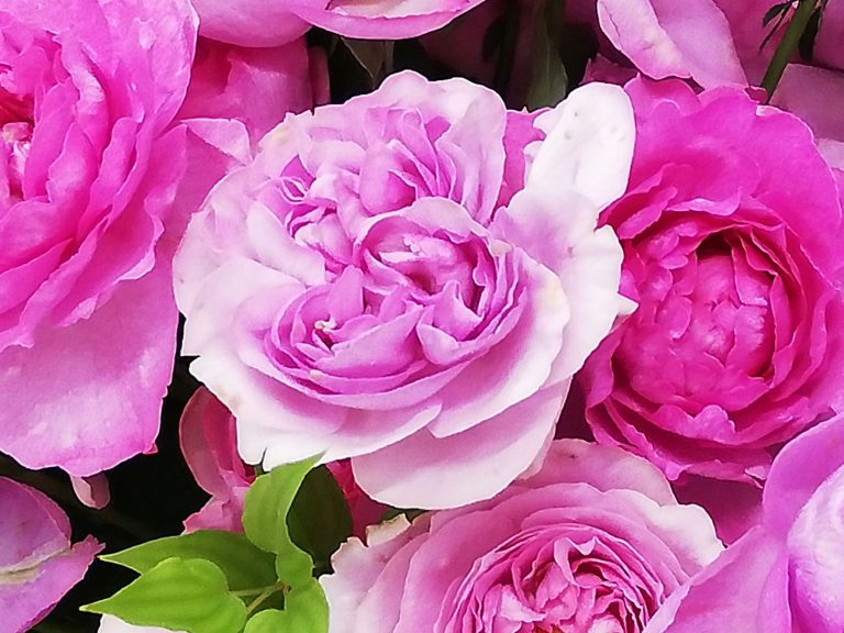 撮影に利用した花束