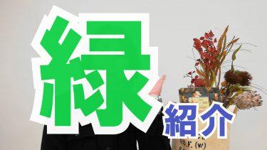 スタジオの観葉植物【動画】